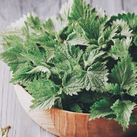 NETTLE INFUSIONS